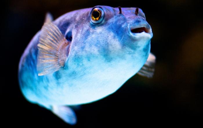 givskud zoo kort trækker torsk i land